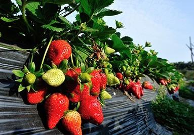 online growshop